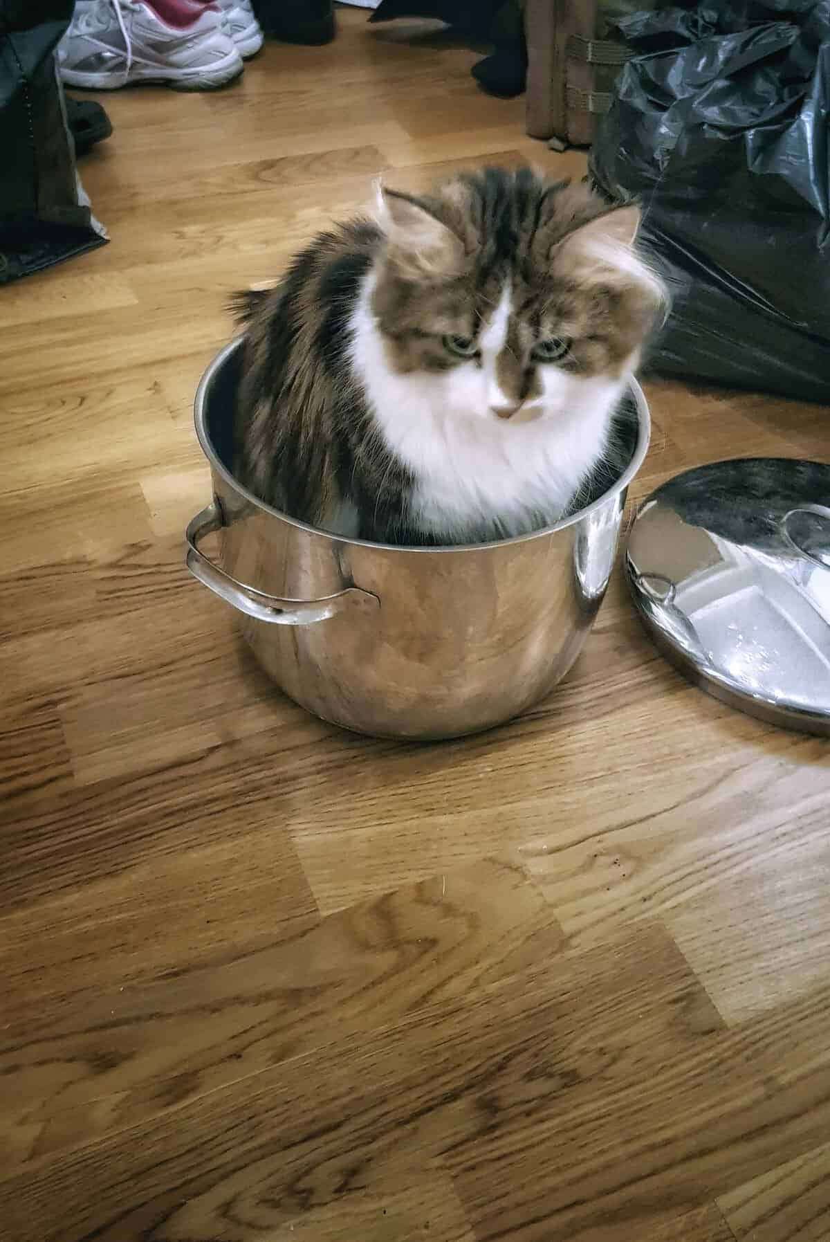 Katt i kastrullen - eller hår i maten?