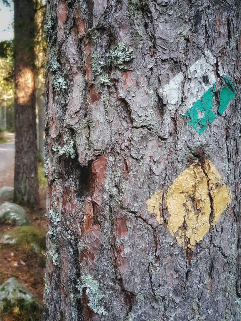Urskogen i Tyresta by