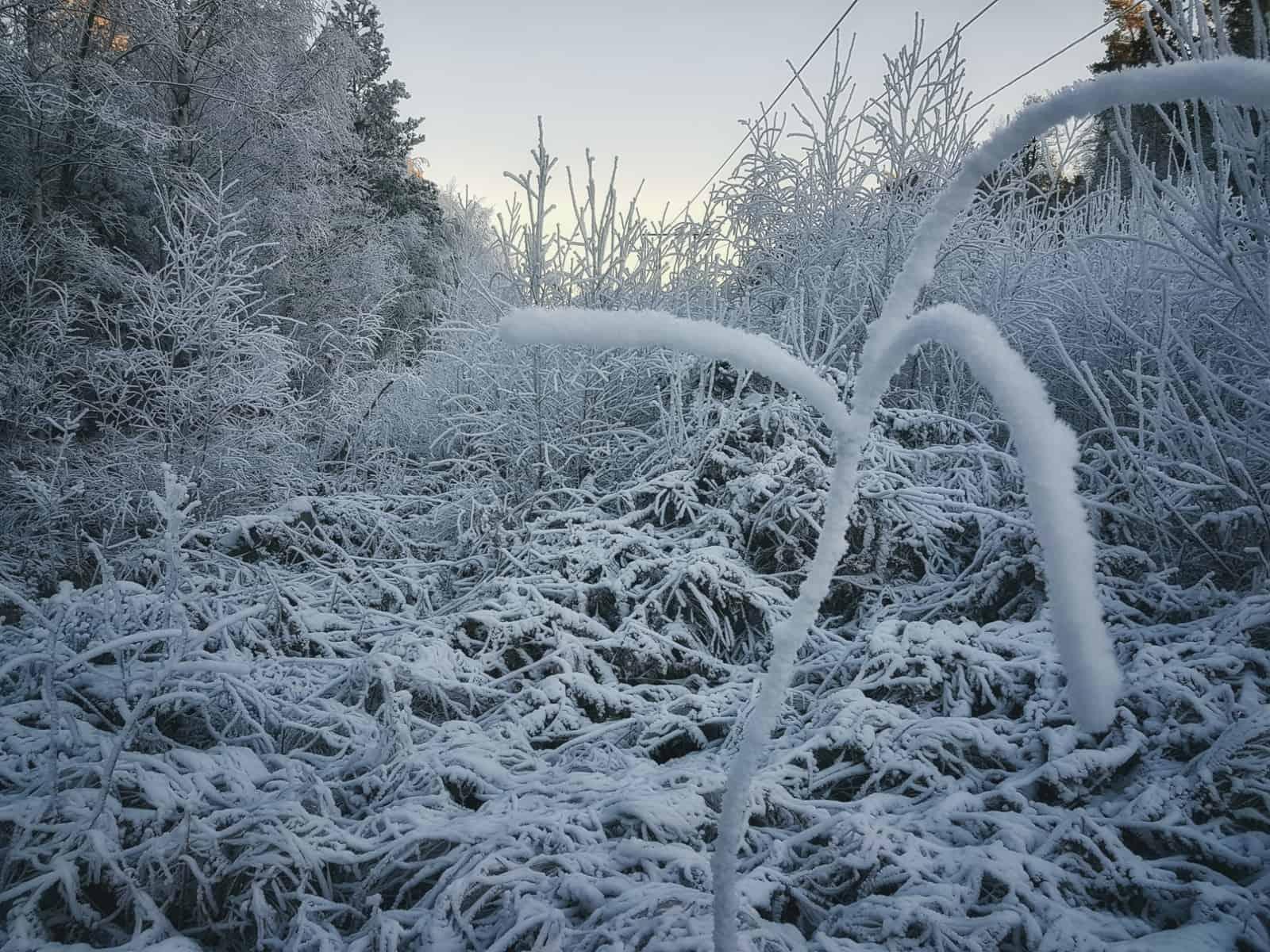 Snötäckt skog i Västerås